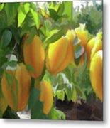 Costa Rica Star Fruit Known As Carambola Metal Print