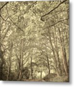 Cosy Path Metal Print