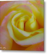 Cotton Candy Roses Metal Print