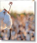 Cotton Field 14 Metal Print