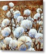 Cotton Fields Metal Print