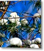 Cotton Pickin Snow Metal Print