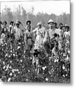Cotton Planter & Pickers, C1908 Metal Print