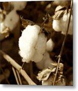 Cotton Sepia2 Metal Print