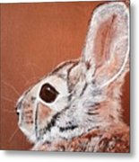 Cottontail  Metal Print