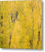 Cottonwood Autumn Colors Metal Print