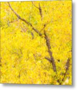 Cottonwood Colors  Metal Print