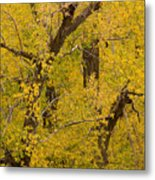 Cottonwood Fall Foliage Colors Metal Print