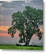 Cottonwood Pasture 2 Metal Print
