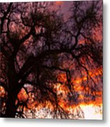 Cottonwood Sunset Silhouette Metal Print