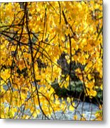 Cottonwood Tree Along The River Metal Print