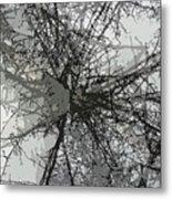 Cottonwood Tree Montage Metal Print
