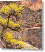 Cottonwood Tree With Vibrant Autumn Colour, Zion National Park, Utah Usa Metal Print