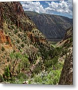 Cottonwoods In The Canyon Metal Print