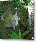 Cougar In The Woods Metal Print