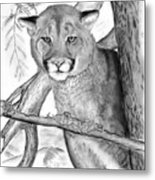Cougar In Tree Metal Print