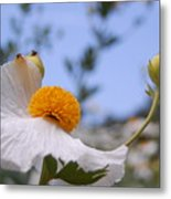 Coulter's Poppy 4 Metal Print