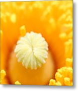 Coulter's Poppy 5 Metal Print