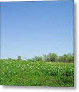 Country Beauty Metal Print