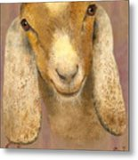 Country Charms Nubian Goat With Bright Eyes Metal Print