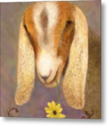 Country Charms Nubian Goat With Daisy Metal Print