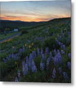 Country Meadow Sunset Metal Print