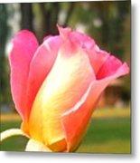 Country Rose Metal Print