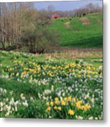 Country Spring Metal Print by Bill Wakeley