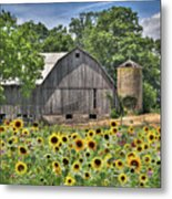 Country Sunflowers Metal Print