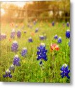 Country Wildflowers Metal Print
