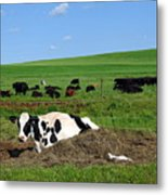 Countryside Cows Metal Print