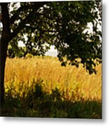 Countryside Of Italy  Metal Print