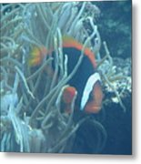 Cousin Of Nemo Metal Print