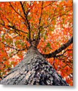 Covered In Fall Metal Print