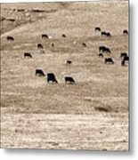 Cow Droppings Metal Print