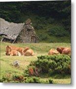 Cow Family Pastoral Metal Print