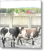 In The Future We Will Have No Cow Fence  Metal Print