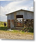 Cow In The Pasture Metal Print