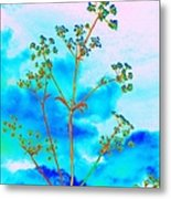 Cow Parsley Blossom 2 Metal Print