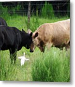 Cow Playing Head Games Metal Print
