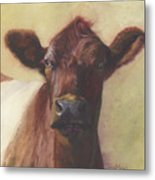 Cow Portrait IIi - Pregnant Pause Metal Print