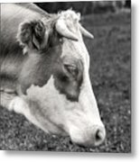 Cow Portrait Metal Print