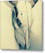 Cow Skull, Vintage Metal Print