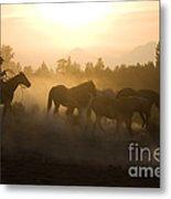 Cowboy Chasing Horses Metal Print