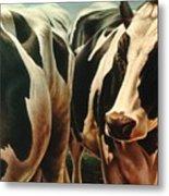 Cows 1 Metal Print