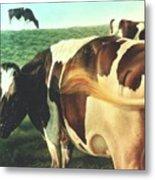 Cows 2 Metal Print