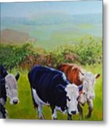 Cows And English Landscape Metal Print