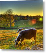 Cows And Stone Fences Metal Print