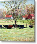Cows Grazing In One Field  Metal Print