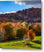Cows In Pomfret Vermont Fall Foliage Metal Print